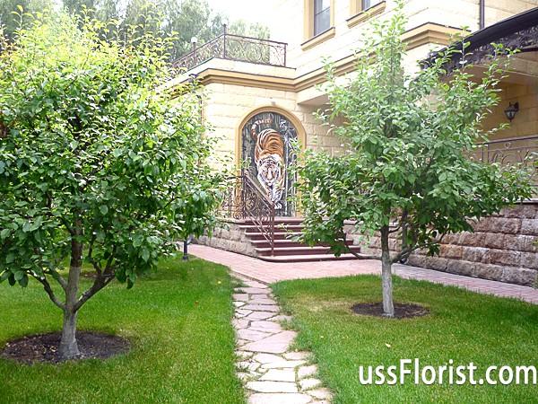Фото - плодовий сад фото