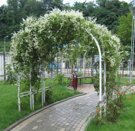 Фото - прикраса саду
