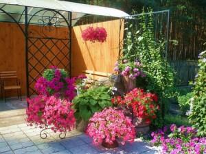 Фото - ваш сад