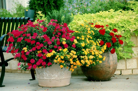 Фото - прикраси саду