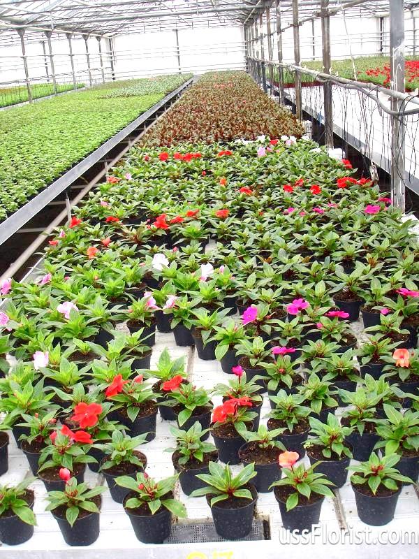 Декоративні рослини: види для дому та вашого парку