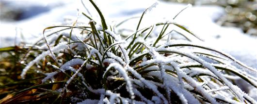 Фото - Догляд за газоном після зими
