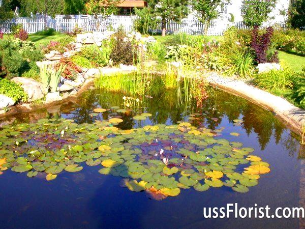 Штучна водойма як прикраса саду і технологія його створення