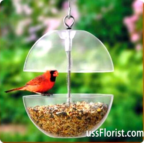 Виготовлення годівниць для птахів своїми руками і чим харчуються птахи