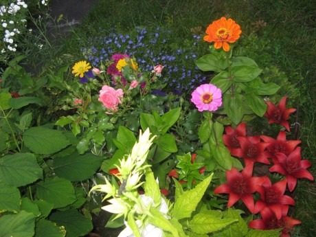 Фото - незрівнянний дачний квітник