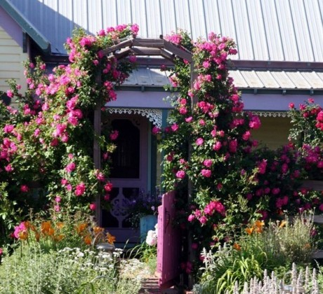 Фото - в'юнкі рослини як прикраса входу в садибу