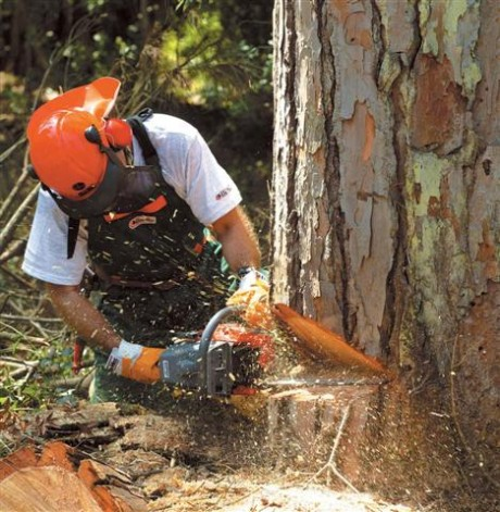 Фото - Валка дерев бензопилкою