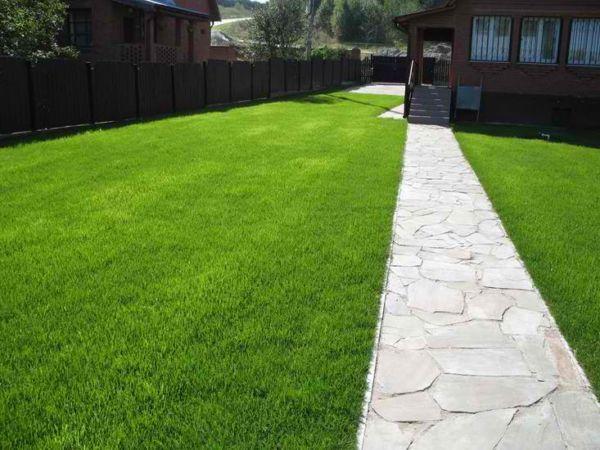 Фото - Для затінених газонів підбирають особливу трав'яну суміш
