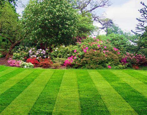 Фото - Деоративная трава для газону облагородить територію