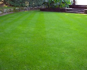 Фото - Сталий трав'яне покриття для спортивного майданчика