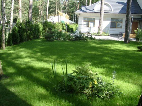 Фото - Декоративна газонна трава відрізняється соковитістю колориту