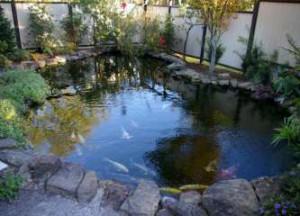 Як розводити рибу в ставку на дачі?