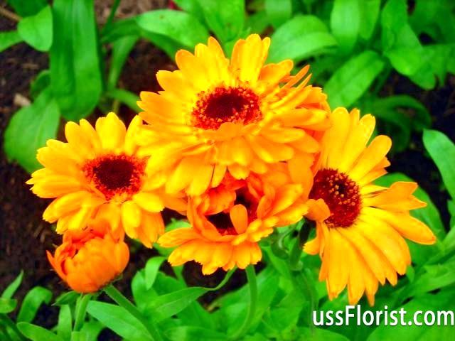 Фото - однорічні квіти для дачі