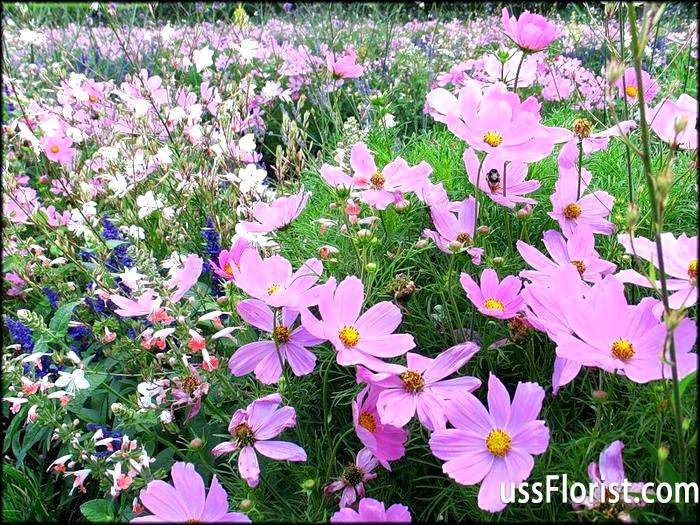 Фото - однорічні садові квіти
