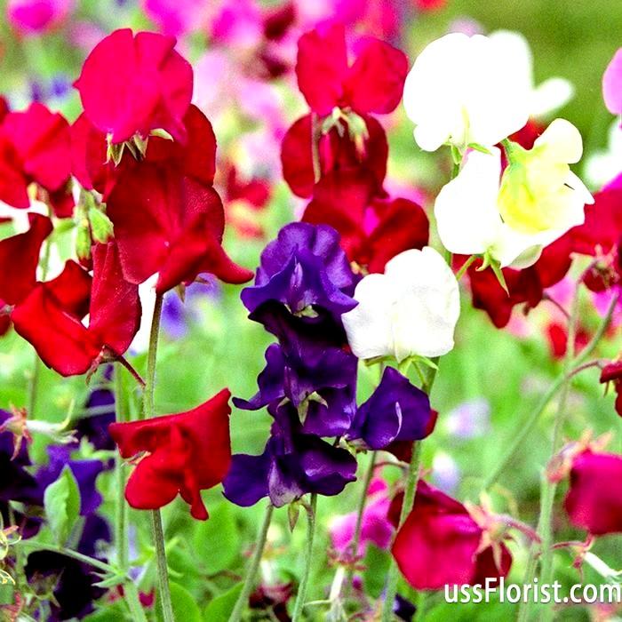 Фото - однорічні квіти для саду