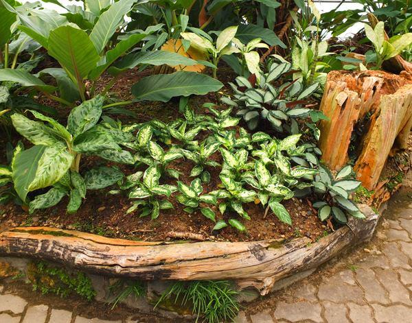 Фото - Унікальні огорожі з корчів і коренів