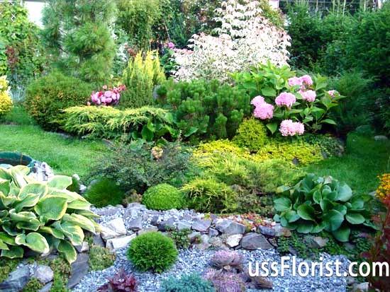Як вибрати дерева і декоративні рослини для саду