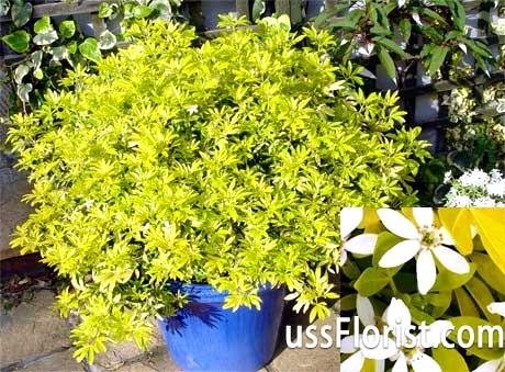 Фото - рослини для зимового саду