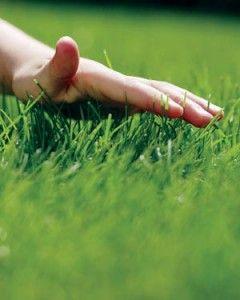 Фото - Влаштуємо газон своїми руками