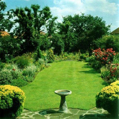 Фото - Через місяць після посіву газон на садовій ділянці сформується