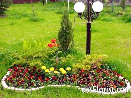 Які багаторічні квіти краще посадити на дачі