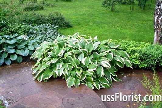 Які рослини і квіти висадити на тіньових ділянках вашого саду