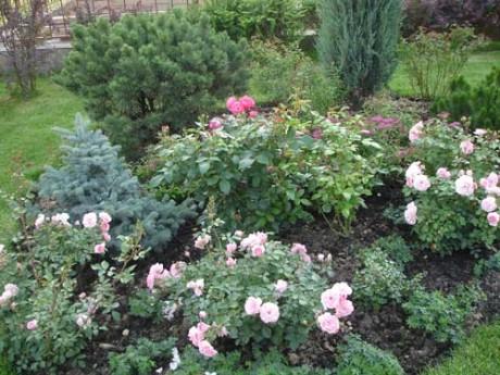Фото - змішана композиція в саду