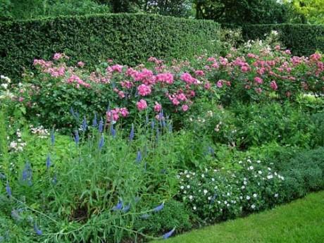 Фото - квітники і клумби з трояндами