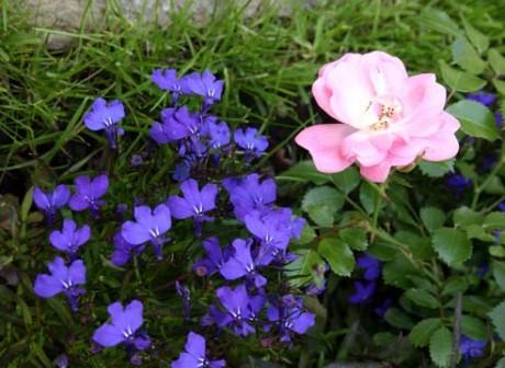 Фото - троянди з польовими квітами