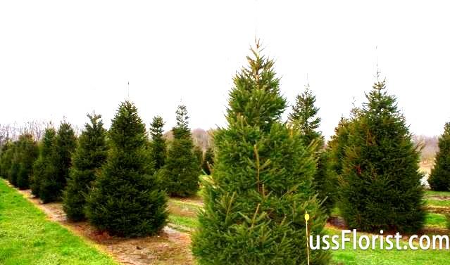 Крупномери: види дерев і технологія посадки