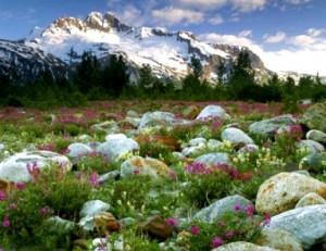Маленька альпійська гірка - шматочок природи Альп на вашій ділянці