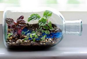 Міні сад в пляшці своїми руками: грандіозні ідеї для крихітного флораріум