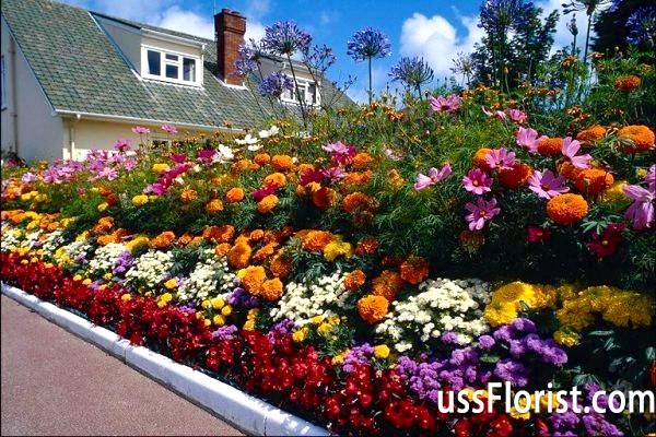 Багаторічні квіти для оформлення клумб - вибираємо кращу композицію