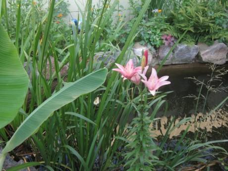 Фото - лілії біля саморобного водойми