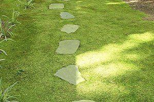 Фото - варіант дизайну саду з використанням моху