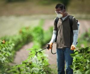 Обприскувачі для саду та городу: вивчаємо види і характеристики