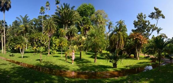 Фото - Колекція пальм