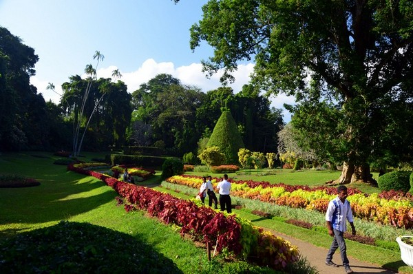 Фото - Японський сад