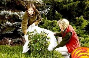 Фото - роботи в саду