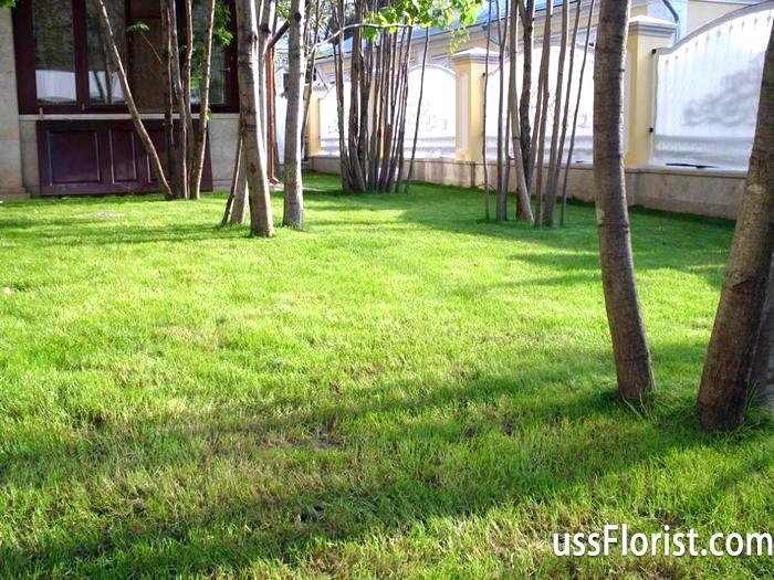 Фото - посів газонної трави