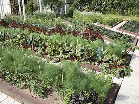 Фото - урожай