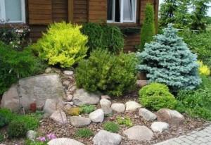 Рослини для альпійської гірки (альпінарію)