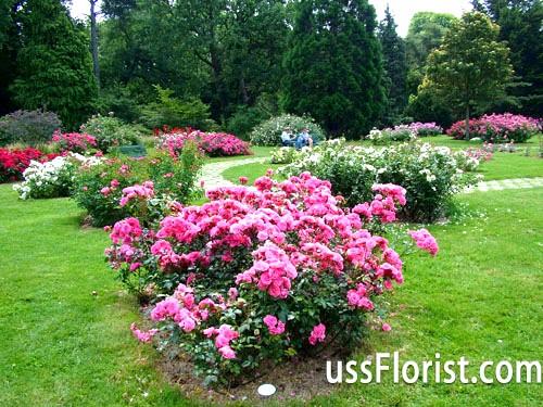 Розарій - чудове прикраса дачної ділянки