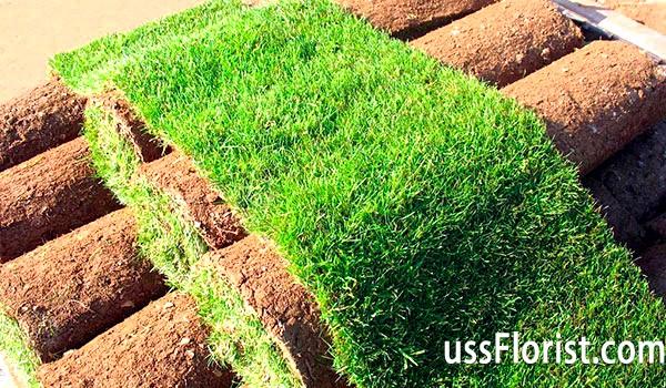 Фото - рулонний газон