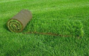 Фото - догляд за газоном