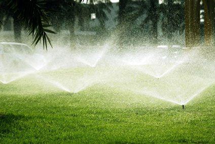 Фото - Регулярний полив газону потрібен нарівні зі стрижкою і підгодівлею