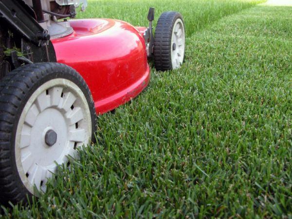 Фото - Швидкий і рівний покіс газону за допомогою газонокосарки