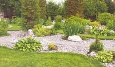 Фото - альтернатива трав'яного газону