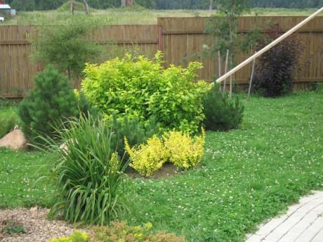 Фото - газон з елементами квітника