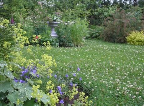 Фото - газон з квітучим конюшиною
